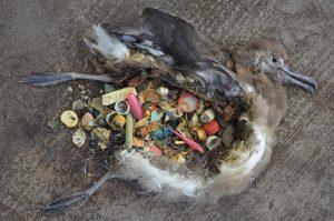 plasticos-peligrosos-animales