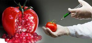 alimentos-transgenicos-en-contra