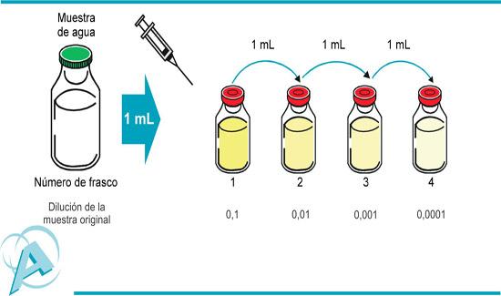 03tecnicarecuentobacteriasmetododilucionextincion