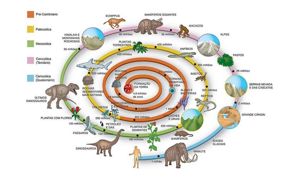 evolucion da vida