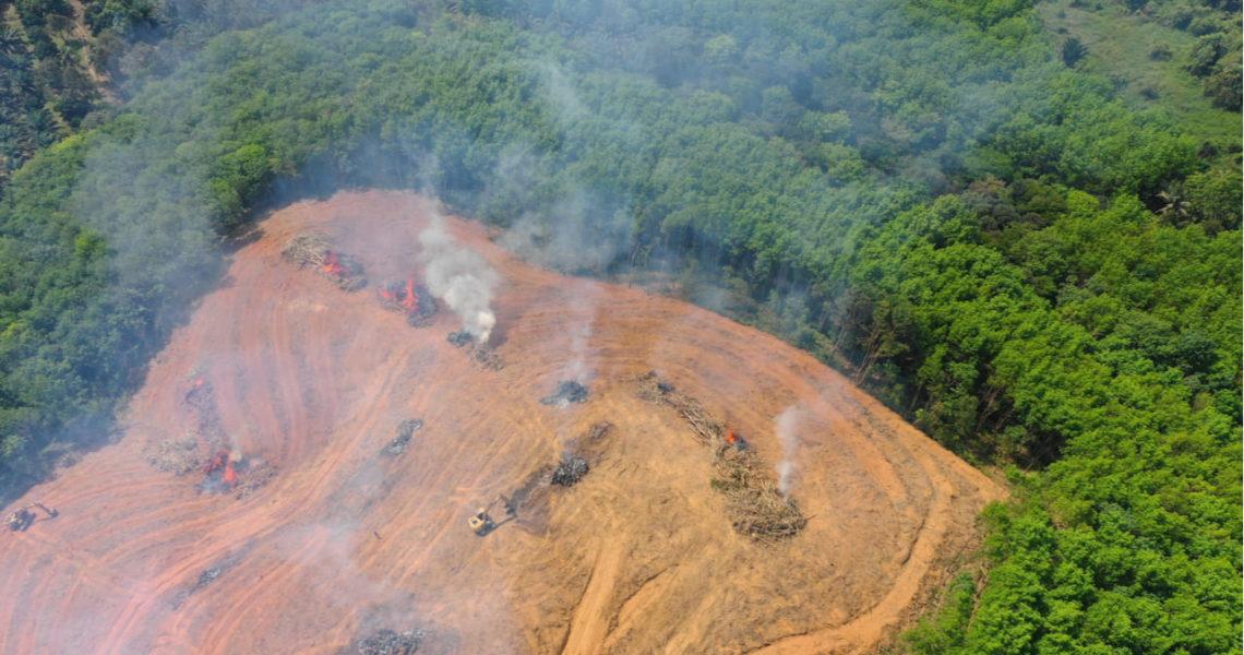 amazonas deforestacion