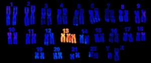 cromosomas patau