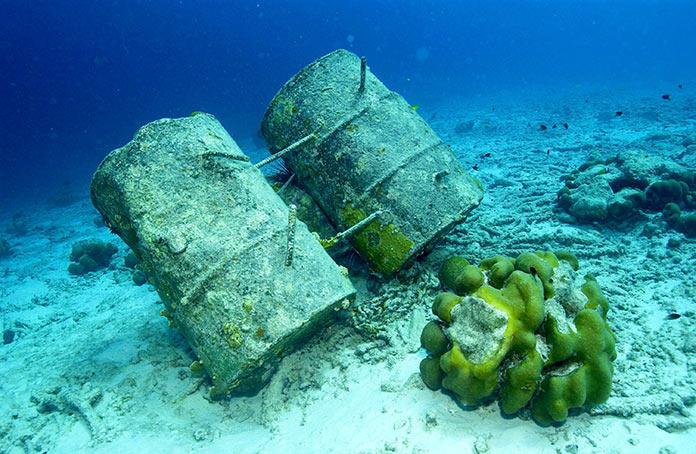 LON01. LONDRES, 20/06/2011.- Imagen facilitada por Marine Photobank, que acompaña un informe realizado sobre el estado de los océanos del mundo, avisando del riesgo de entrar en una fase de extinción de especies marinas sin precedentes en la historia de la humanidad, solo comparable a la hecatombe que hace 55 millones de años provocó la desaparición del 50 por ciento de los peces de aguas profundas. EFE / Wolcott Henry.